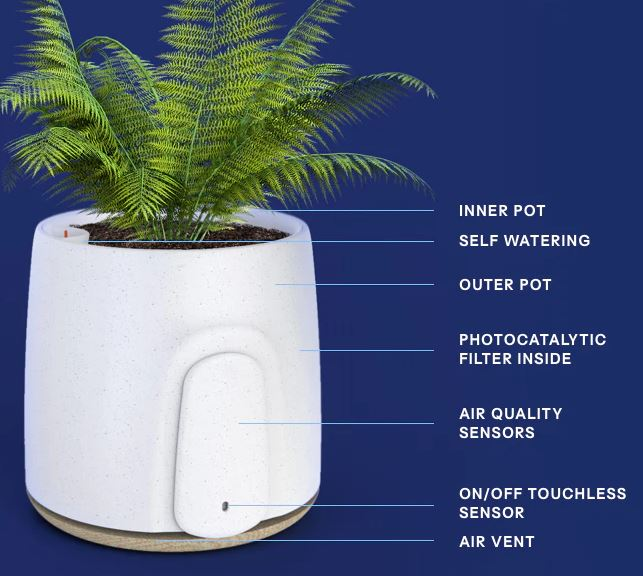 Natede Smart Natural Air Purifier Review